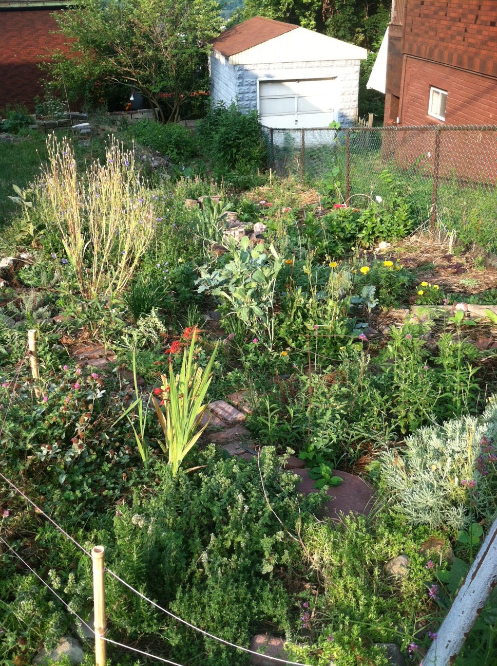 General Sisters Garden at 7am Weeding Time!